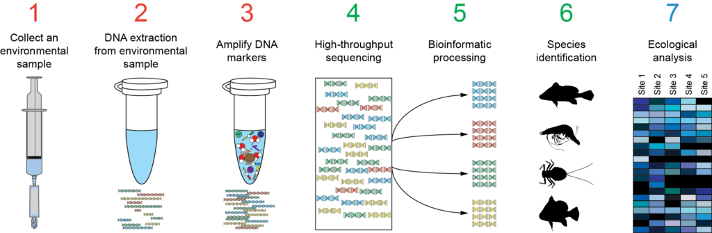 Amplicon sequencing and high-throughput genotyping ...
